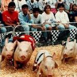 Hog Race
